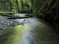 Prarie Creek Redwoods State Park.  Photo By Richard Sharp